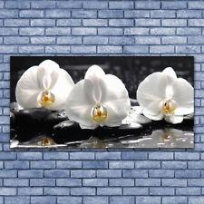 Wandbilder Glasbilder Druck auf Glas 140x70 Blumen Steine Pflanzen