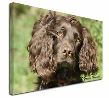 More details for chocolate spaniel 'yours forever' x-large 30