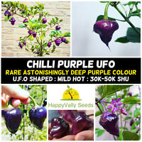 Chilli 'PURPLE UFO' 7 Seeds MEDIUM HOT pepper spring summer vegetable RARE CHILI
