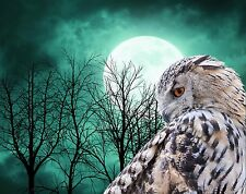 Teal Black White Brown Owl Moon Trees Photo Art Print Home Decor Picture Matted