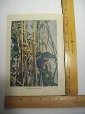1904 Antique Print  Red-Headed Woodpecker 1900-1949 Birds Vintage Neltje Banchan
