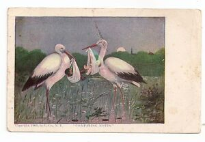 "Antique Black Americana "" Comparing Notes "" Post Card ~ 1905"