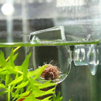 Acquario Portacampione rosso + Sucker Coppa delle piante acquatiche Cristallo