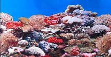 """Vivarium / Aquarium REEF Background 19"""" Tall Poster Fish Tank Picture viv"""