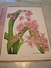 Margo Brinton Orchid Flower Print 1986 Oncidium Ornithorhyncum