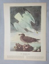 1942 Audubon #291 Herring Gull & #292 Great Crested Grebe Full Color Lithograph