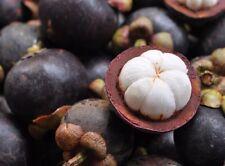 ☺2 graines de mangoustan /garcinia mangostana