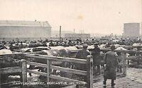 POSTCARD     NEWCASTLE  ON  TYNE   Cattle   Market