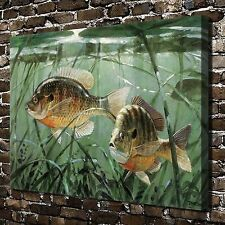 Amazon Tropical fish Paintings HD Print on Canvas Home Decor Wall Art Pictures