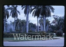 1962 35mm Kodachrome Photo slide Boca Raton Fl Building  Palm Trees