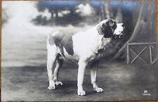 St./Saint Bernard Dog 1910 Realphoto Postcard, Studio-Shot #2