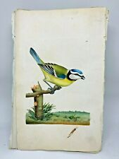Blue Titmouse - 1783 RARE SHAW & NODDER Hand Colored Copper Engraving
