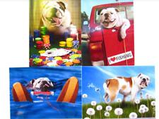 BULLDOG BIRTHDAY CARD Avanti Press BRIGHT & FUNNY DOGS (2 of 2)