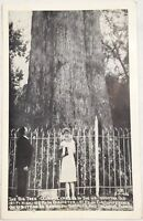 Old Real Photo Postcard RPPC The Big Senator Tree Oldest Cypress in US Orlando