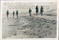 1974 Press Photo People Walk Beach Among Dead Fish St Andrews Park Panama City