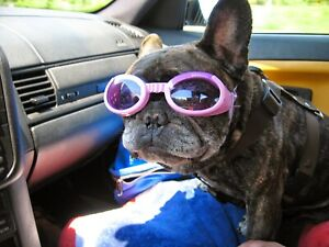 DOGGLES DOG GOGGLES SUNGLASSES UV PROTECT EYE WEAR ANTI FOG Size SM LILAC PURPLE
