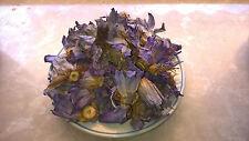 (31,90 €/100g) 50 gramos räucherwerk Nymphaea caerulea/azul Lotus cosecha 5/2017