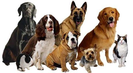Oakswarren pet supplies