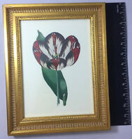 Vintage Shadow Catchers Framed Floral Print Wall Art