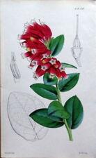 Lithograph Pink Original Art Prints