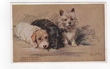 Cairn/ Sealyham/ Scottish Terrier Vintage  Dog Postcard Mac Lucy Dawson 1933