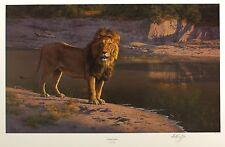 "Anthony gibbs ""soir de reflets"" lion signé ltd edition! taille: 49cm x 72cm neuf rare"