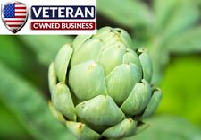 Artichoke seeds green globe 50+ seeds Non-GMO and Heirloom Vegetable seeds
