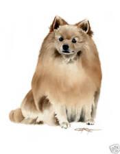 German Spitz Painting Dog Art 13 x 17 Print by Artist Djr