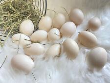 New Listing12 Fertile Duck Hatching Eggs Pekin Khaki Campbell Blue Swedish Black Swedish