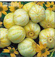 50 Japan Fruit Melon Seeds Superior Honey Flesh Vegetable Seeds Delicious Melon
