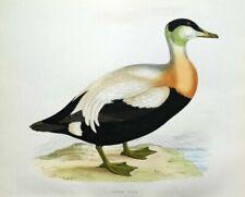 Woodcut/Block Birds Original Art Prints