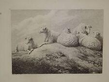 SAMUEL HOWITT 1765-1822 GRAVURE ANGLAISE ANIMAL MOUTON BREBIS MONTAGNE 1810