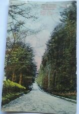 VINTAGE SCOTTISH POSTCARD BEECH HEDGE, MEIKLEOUR,  BLAIRGOWRIE,  1909