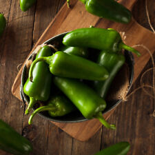 Green Whole Jalapeno Chilllies 2.8kg - SPICESontheWEB