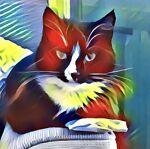cat-in-pyjamas