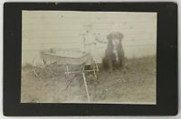 Vintage Photo Young Girl With Wagon And Puppy - Old Found Photo Snapshot