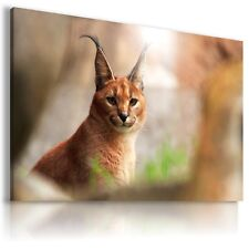 LOVELY LYNX Wild Animals Canvas Wall Art Picture Large Sizes  AN18  MATAGA .