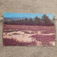 Vintage Postcard Wild Flowers, Date Gardens, Snow Capped Mountains, California