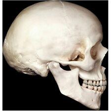 Jointed Skull Cutouts Halloween Decor