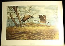 """JOHN S WILSON, GEESE/GOOSE PRINT TITLED """"CANADA'S IN SPRING"""" NUMBERED  310/850"""