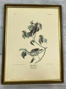 1946 John James Audubon Bien Chromolithography Print Wood Thrush by J.Bien N.Y.