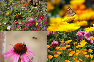 Wild Flower Seeds Help Save The Bees Wildflowers Wildflower Meadow Mix 25g