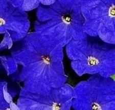 Petunia - Mirage Mid Blue - 50 Seeds