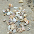 1 Bag Mixed Sea Shells Shell Craft Aquarium Nautical DIY Decor Ornaments