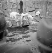 Negative 6 x 6 -Köln-Zoo-Tierpark-Teich-1939-Eisbär-gehege-05