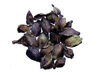 Grande Pimprenelle - Sanguisorba Officinalis - Great Burnet - SEM05