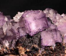 18 cm wide Purple Fluorite, Calcite and Sphalerite from Elmwood Mine, Tennessee
