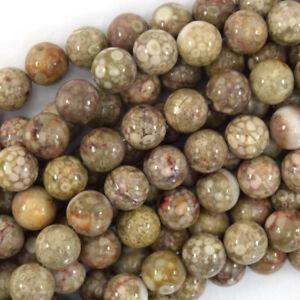 "Natural Fossil Jasper Round Beads Gemstone 15.5"" Strand 4mm 6mm 8mm 10mm 12mm"