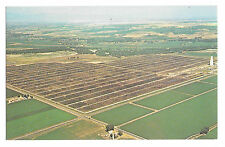 Greeley CO Monfort Gilcrest Cattle Feedlot Aerial View Vtg Lew Dakan Postcard