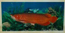 rare PVC Aquarium Background Poster Fish Tank Wall Decorations-red arowana